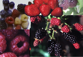 berry_mixture.jpg